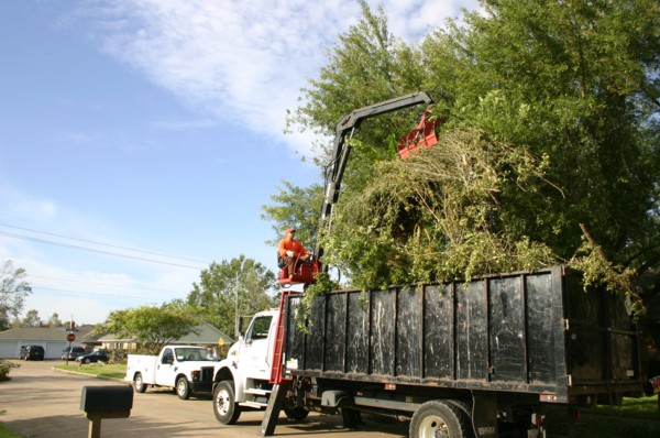 Truck containing brush, limbs, and heavy trash