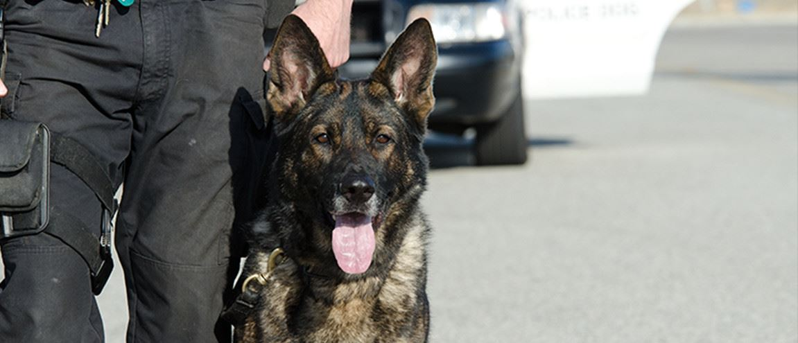A K9 police officer with his german Shepard dog